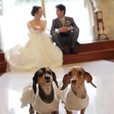 チャペルクレール奈良では 結婚式も撮影もPETと一緒に!