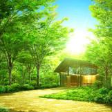 屋上に出れば、そこは別世界。木漏れ日が降り注ぎ、鳥のさえずりが響く「東京の森」