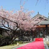 白山殿/毎年4月になると、花を開く桜たち。県内では珍しい「桜」に囲まれたの中での結婚式。 桜吹雪が天然のフラワーシャワーを演出する。