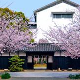 春には桜の花が満開になります。