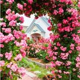 薔薇アーチと教会