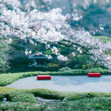 満開の桜の元で撮る記念写真は特別な想い出になる
