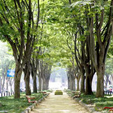 緑に包まれた定禅寺通りで笑顔あふれるウエディングを叶えよう