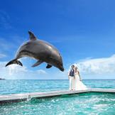 挙式後、イルカとドレスのまま撮影できる「ドルフィンセレモニー」が大人気。幸せを呼ぶイルカが、華麗にジャンプ!祝福の花冠を花嫁へプレゼントします。かわいいイルカからの祝福に感動がさらに高まり、ゲストの笑顔もはじけます。