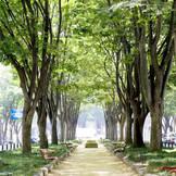 洗練された都会の街並みと、樹齢百年のケヤキ並木が美しく融合したメインストリートからアイアンゲートを進み、お洒落な貸切邸宅へ。憧れを越える素敵な1日はここから始まる