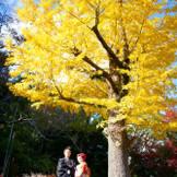 毎年大人気の秋のロケーション撮影