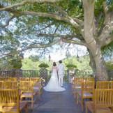ヒルトップのシンボルツリー・モチの木の元で自然を感じながら誓いを・・・