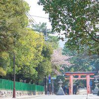 奈良公園内にある菊水楼だからこそお越しいただく前のロケーションも楽しんでいただけるポイントです♪