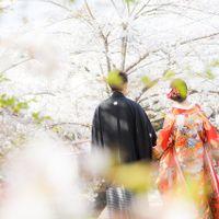 春-桜-と前撮り
