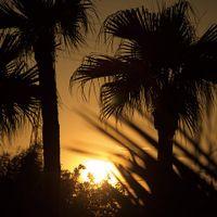 刻々と移りゆく空の表情。椰子の木々が夕日に浮かび上がるサンセットリゾートのウエディングもおすすめ!パスポートなし、海外のようなロケーションで叶う極上のひととき。