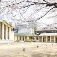 満開の桜と明日館