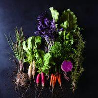 地元の野菜を使用したリビエラキュイジーヌ