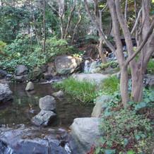 自然の湧水。水の音が聞こえます