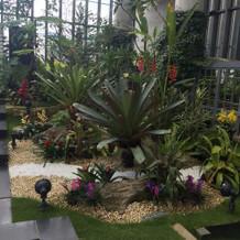 植物園です。