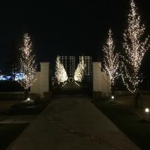並木道がライトアップされ綺麗です
