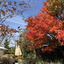 ガーデンの紅葉