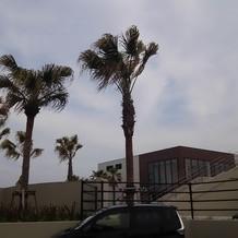 建物と駐車場周りはヤシの木があります