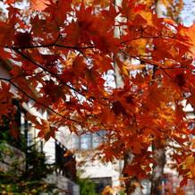 式場前の中庭の紅葉