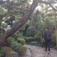 日本庭園のような感じ