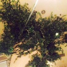 天井まで伸びる葉は日々育っているそう