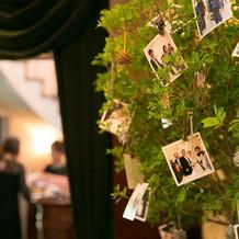 本物の木でフォトツリー