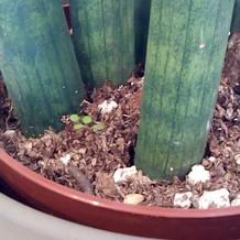 植物が全て本物で新芽が出てました!
