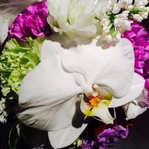 胡蝶蘭で豪華に華やかにしてもらいました!