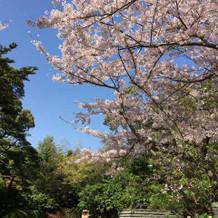 玄関。四季折々の木々が出迎えてくれる。