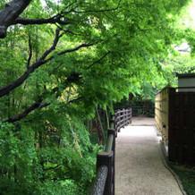 裏道にあたる竹林も素敵!