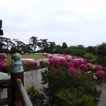 お庭のツツジが綺麗でした