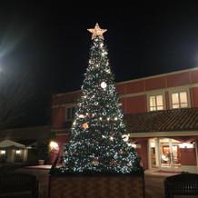 クリスマスシーズンの大きなツリー