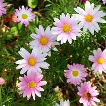チャペルのお花。季節ごとに違う?