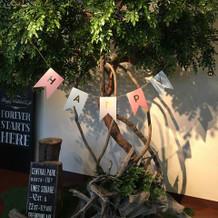 ゲストをお迎えするシンボルツリー。