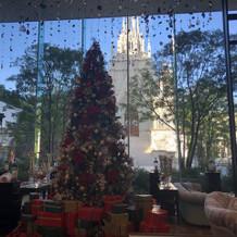 季節柄、大きいクリスマスツリーが!