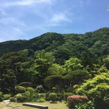新緑が綺麗な6月のお庭