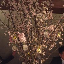 桜の木がドカーンと