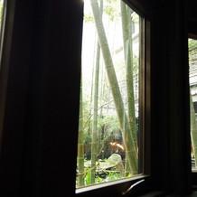 竹林があります