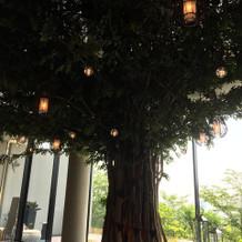 シンボルツリー