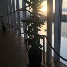 ロビーに観葉植物