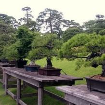 樹齢数百年の盆栽の展示
