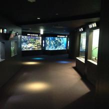 貸切状態の夜の水族館