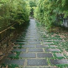 竹の道。石畳と竹がとても素敵でした。