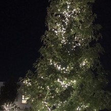 大きな木をライトアップしていました