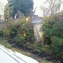 お気に入りの庭です