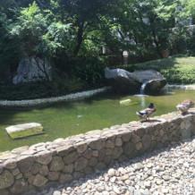 マグノリアの高砂後ろの庭園には鴨が!