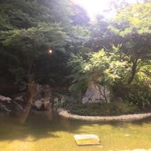 マグノリアから見える庭園