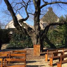 桜の木のガーデン!