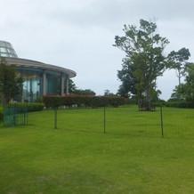 ガーデンは緑であふれてます。