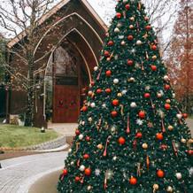 冬は大きなクリスマスツリーが出ています!