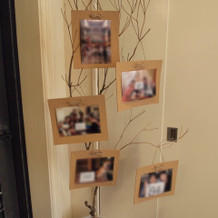 写真を木に飾っていました